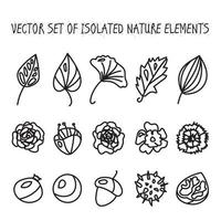 Vintage flowers, fruits and leaves icons collection vector