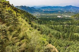 Bosque de pinos verdes en la ladera de la montaña en el lago Sun Moon, Taiwán foto