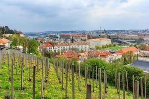 Prague as seen from the Prague Castle photo