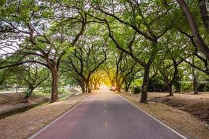 Landscape of straight road under the tunnel trees, Thailand photo