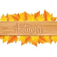 autumn leaves with wooden board on white background vector
