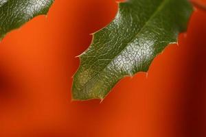 flor de la flor berberis aquifolium familia berberidaceae macro disparar foto