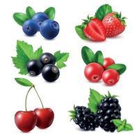 Berries Realistic Set Vector Illustration