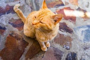 Sweet lazy ginger kitten - orange kitten close up photo