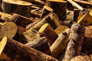 Cut and stacked dry woods. Pile of sawing woods. photo