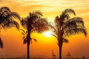 Silhouettes of coconut palms in the port area of Rio de Janeiro. photo