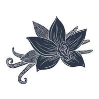 Hand Drawn Vanilla Sticks and Flower Silhouette Engraved Illustration vector