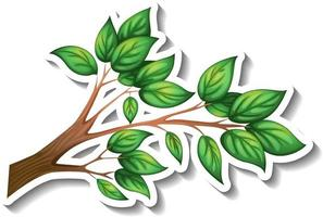 Tree branch with green leaves sticker on white background vector