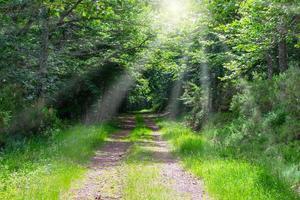 Camino en el bosque con rayos de luz a través de los árboles. foto