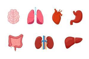Human anatomy internal organ set with brain lung intestine heart vector