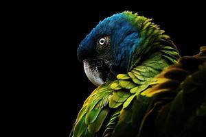 el guacamayo de cabeza azul foto
