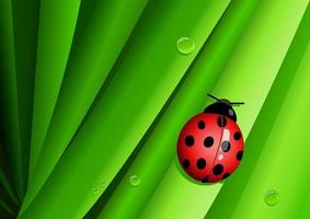 Graphic illustration of a lady bug on green leaves vector