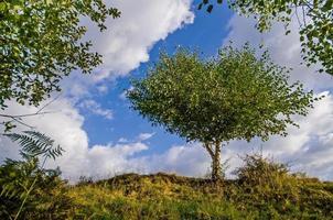 abedul blanco rodeado y custodiado por hojas de otros árboles foto