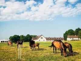 Cerrar raros hermosos caballos stand campo verde aislado foto