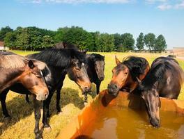 cerrar caballos raros i foto