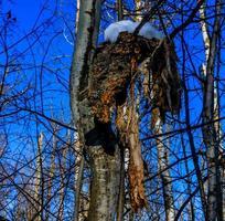 musgo naranja en el tronco de un árbol. Parque Nacional Elk Island, Alberta, Canadá foto