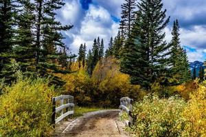 Fall colours abound around Marsh loop. Banff National Park, Alberta, Canada photo