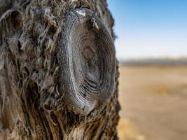 beautiful dry tree trunk against the blue sky.wood texture photo