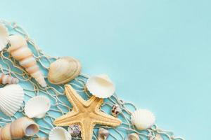 seashells on a blue background photo