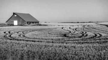Antiguo granero en campos agrícolas de Palouse en la mañana foto