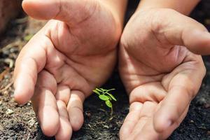 Las manos protegen el cultivo de plantas verdes en suelo fértil. foto