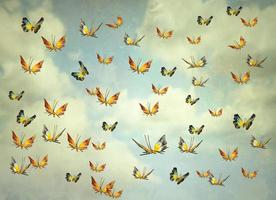Butterflies in the sky photo