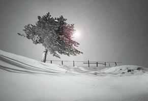 la soledad de un árbol foto