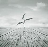 Anywhere it can Grow photo