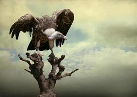 The Eagle Background photo