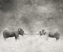 elefantes enamorados foto