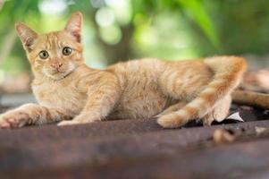 Portrait of ginger cat in the garden photo