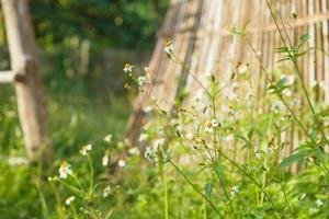 flores margaritas en verano primavera verano natural foto