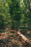 paisaje de bosque verde en primavera y musgo verde foto