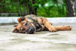 cachorro callejero se encuentra en el pavimento foto
