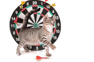 cross-eyed tabby kitten next to darts photo