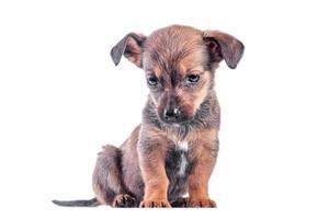 Triste cachorro mestizo marrón bajó la cabeza y se sienta foto