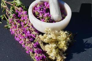 salicaria - Lythrum salicaria foto