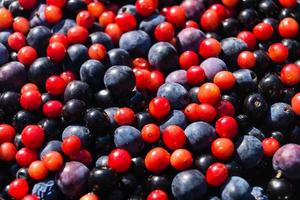 Alternative Medicine with pharmaceutical herbs fruits and berries photo