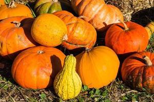 Pumpkins on a Farmers Market photo