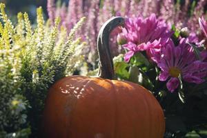 Pumpkins on a Farmers Marke photo