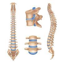 Spine Realistic Set Vector Illustration