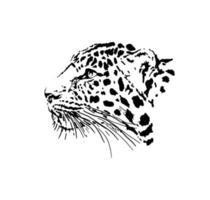 leopard head  graphics vector