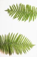 Fern leaf on paper background photo