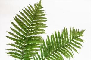 Minimalism style, fern leaf on paper background photo
