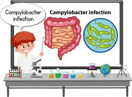 Young doctor explaining Campylobacter infection vector