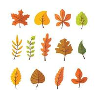 Collection of Different Autumn Leaves vector