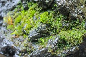 primer plano, de, musgo, en, la roca foto