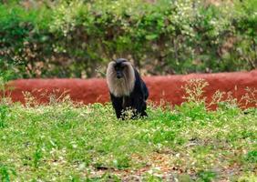 mono sentado en la hierba, en el zoológico, fondo de naturaleza foto
