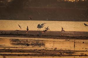 Bird walking in water , Birds flying , Sunset view at lake photo