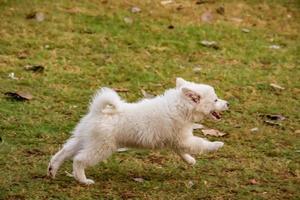 perro mirando a otros perros en el parque, perro en el parque de perros, amante de las mascotas foto
